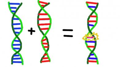 علم ژنتیک، ژن و کروموزوم در الگوریتم ژنتیک