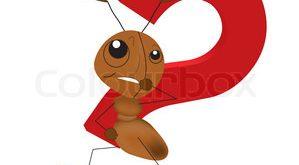 كلوني مورچه ها